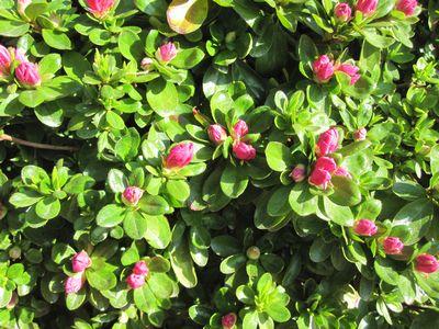 springgarden-4.jpg