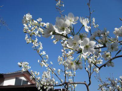 springgarden-5.jpg