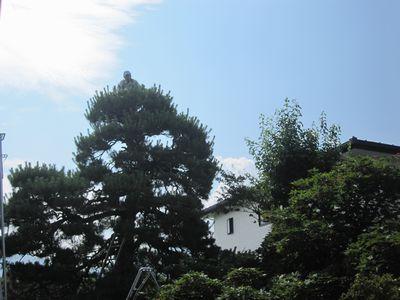 ueki-1.jpg